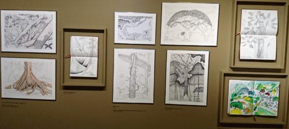 Les dessins de Francis Hallé sont à la fois d'une grande rigueur scientifique et d'une profondeur esthétique.