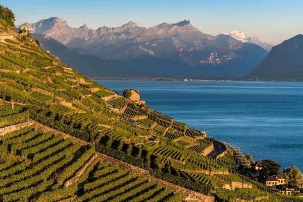 Vaud en Suisse est le berceau historique du Chasselas