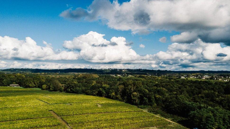 Intégrer des arbres dans les vignobles permet, notamment, d'apporter de la fraîcheur et de l'ombre lors des épisodes caniculaires