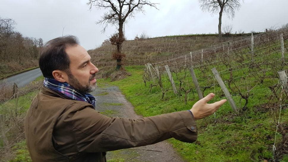 Grand amateur de vins, Ivan Massonnat (ici dans le Clos des Ruchères à Savennières) souhaite porter et révéler le terroir du Layon sur les traces de Jo Pithon. Son objectif est de produire des grands vins de gastronomie et de développer un oenotourisme haut de gamme.
