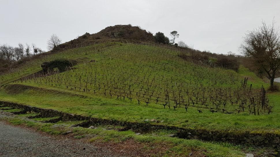 Le coteau des Treilles, replanté en vignes (chenin) par Jo Pithon. La vigne était déjà présente sur ce terroir et fut laissée à l'abandon après la dernière guerre mondiale en raison de la forte pente difficile à travailler.