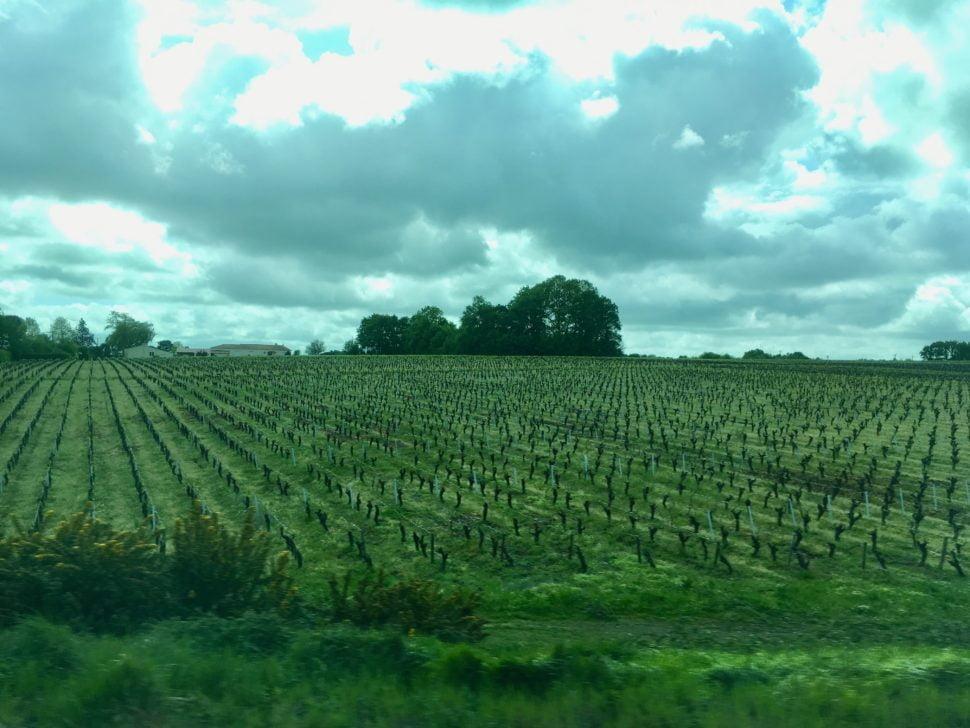 Le vignoble de Gorges, un des crus de Muscadet, au sud-est de Nantes