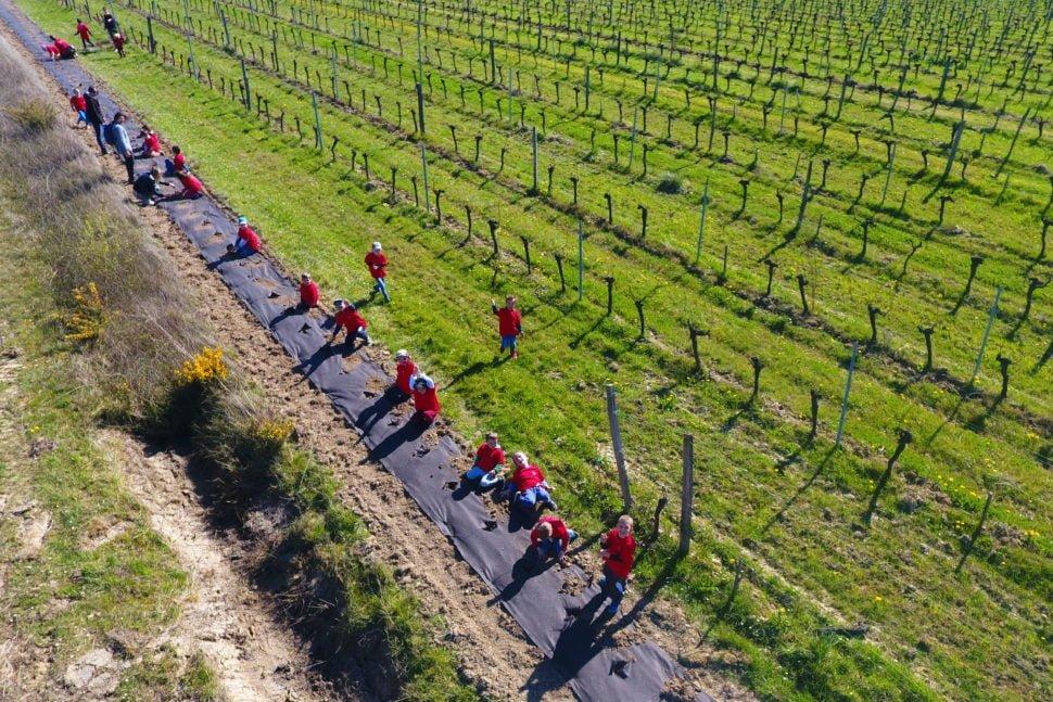 Des écoliers de grande section et de CP de l'école de la commune de Le Plan-sur-Garonne préparent la plantation de haies sur une parcelle du Château Grand Ferrand