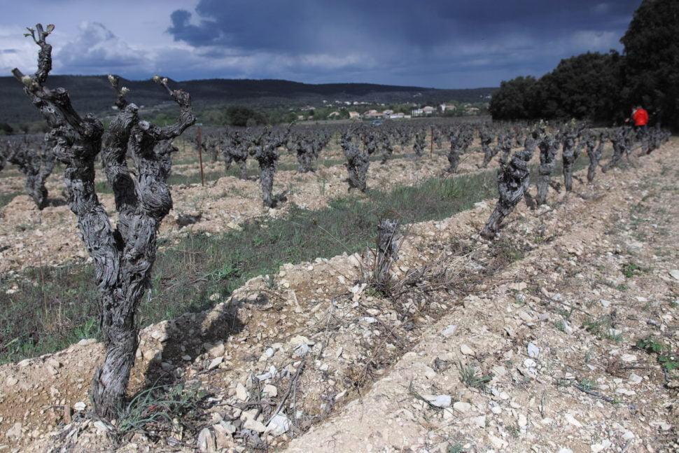 Vieilles vignes de syrah sur la parcelle Pégaline – qui «pègue» (colle) en patois -, exploitée par Philippe Martin et de Nathalie Héricourt (Mas Pégaline), située sous l'éperon rocheux de Claret-le-Vieux, une langue d'argile qui descend du causse. Le coteau, en pente douce, conserve, grâce à son sous sol, de la fraîcheur pendant la période estivale, l'eau y étant en abondance. Les vins qui en sont issus sont profonds et élégants