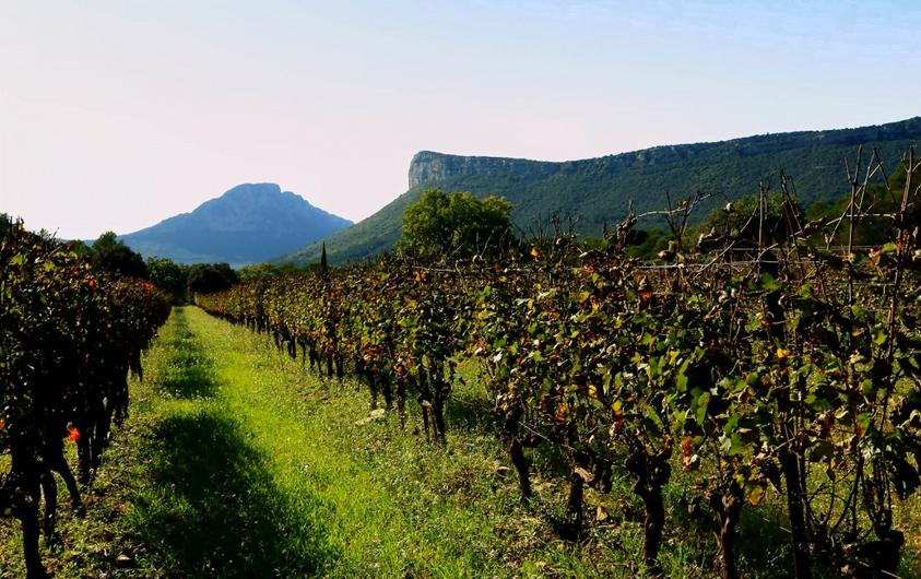 Le Pic Saint Loup couvre 17 communes, adossées aux premiers contreforts cévenols