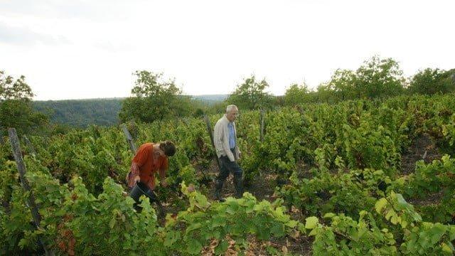 Les vignes serbes