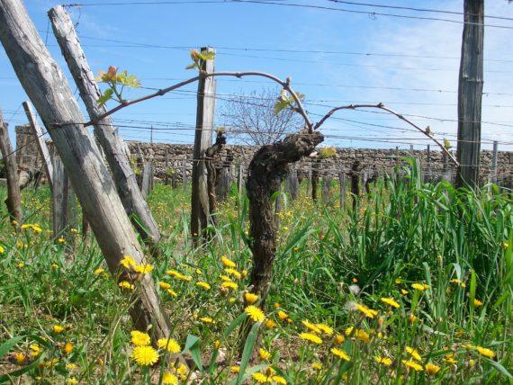 La biodiversité dans les vignes