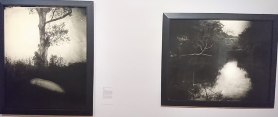 La fascination des paysages saisis par Sally Mann : ici les berges de la rivière Tallahatchie où le corps d'Emmett Till a été jeté vient de la technique du collodion humide, ouverte à l'accident lors de la pause.